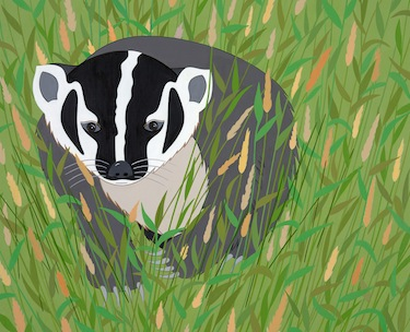 stripes american badger